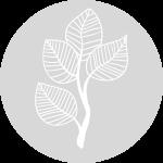 Floristik-Steger